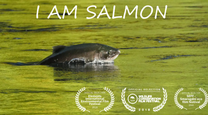 I am salmon