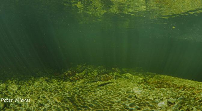 Quatse Salmon Stewardship Centre