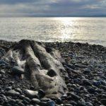 wooden skull